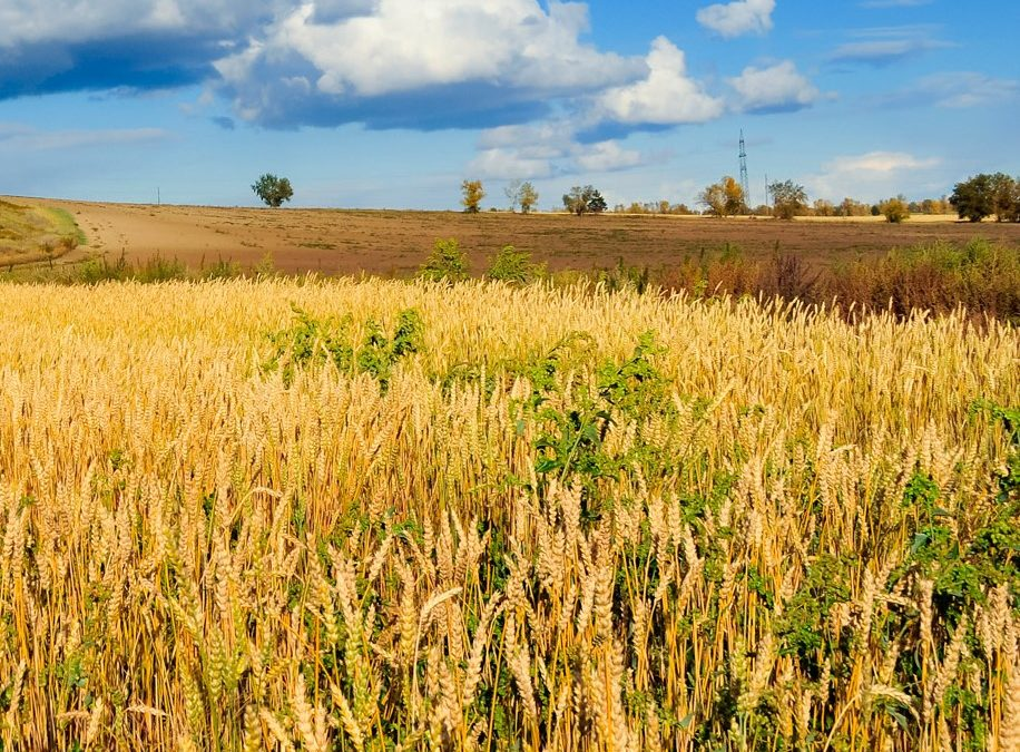 Living with the Weeds and the Wheat